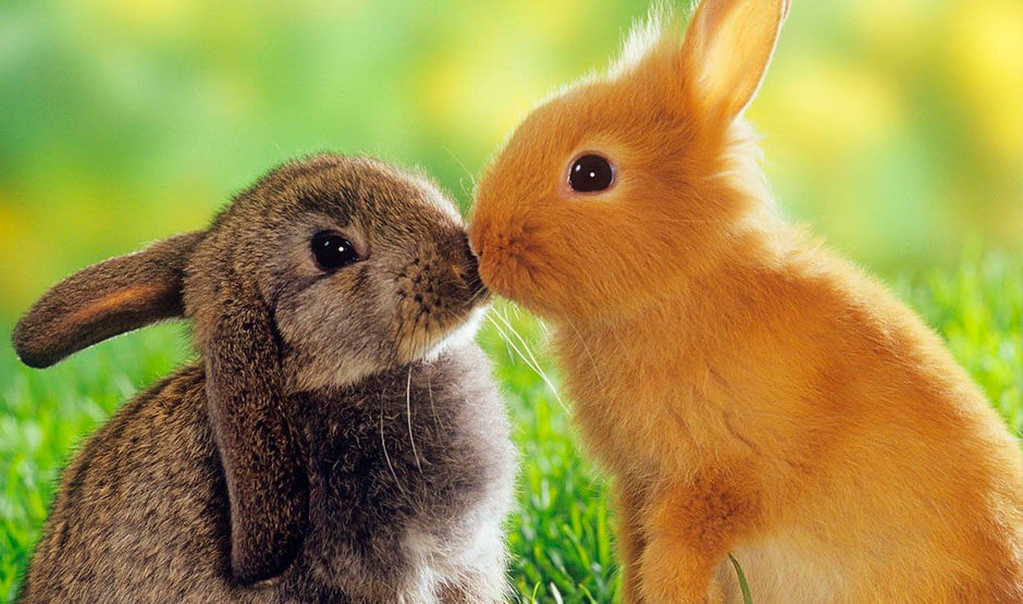 Pet Rabbit Care Guide  thesprucepetscom