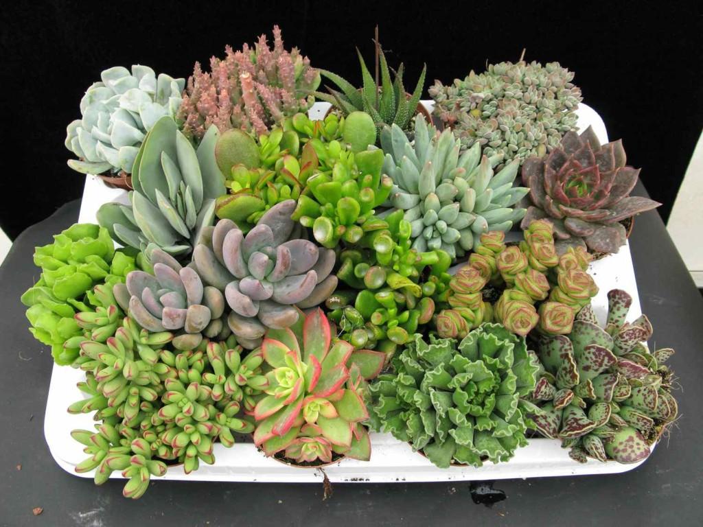 Plantas-Suculentas-2-1024×768