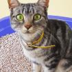 caixa-areia-do-gato