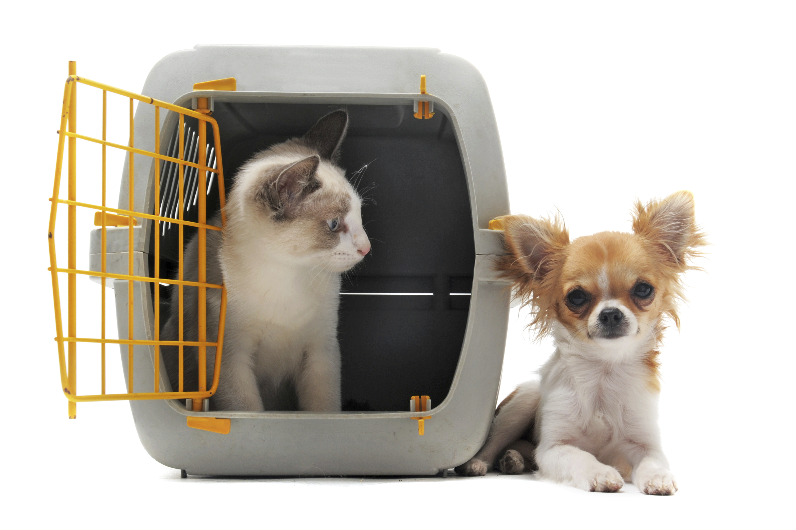 conheca-os-principais-meios-de-transporte-para-seu-cao-ou-gato-1