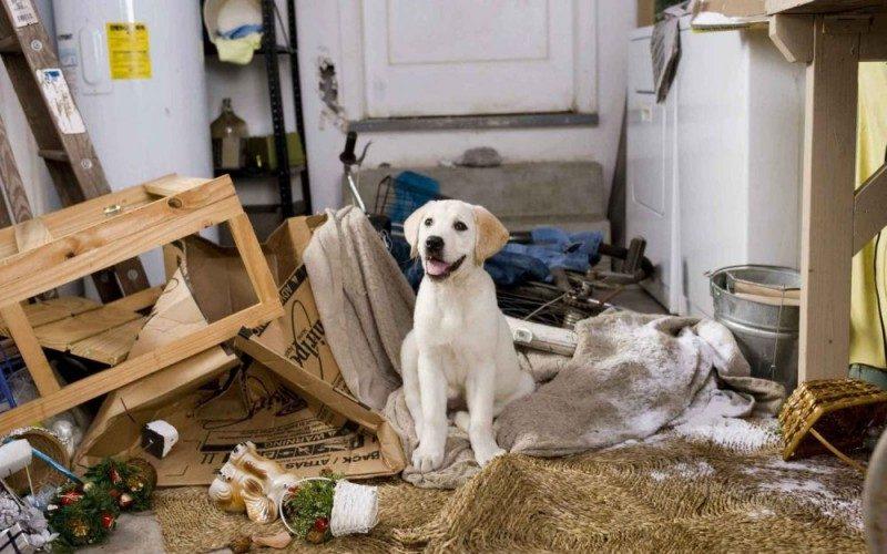 lo-splendido-cucciolo-di-labrador-protagonista-del-film-io-marley-100518