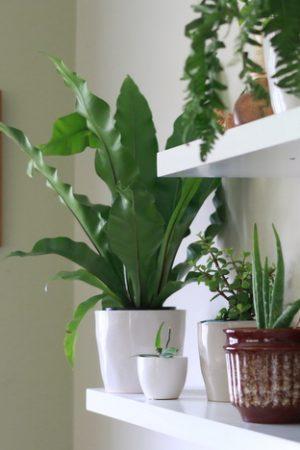 Cultivar-Plantas-em-Ambientes-Internos-9