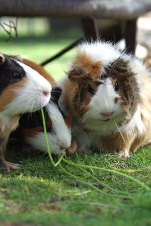 140897-roedores-domesticos-motivos-para-ter-um-em-casa-e-qual-escolher-986×640