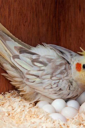aves450