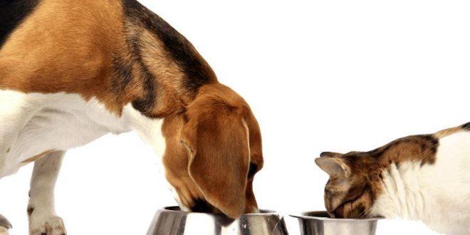 caes-e-gatos-a-comer-01-660×330