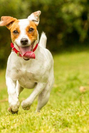 fisioterapia-para-cachorro-voltar-a-andar-1170×780