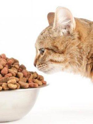 por_que_meu_gato_nao_quer_comer