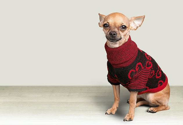 Dog Humor winter clothes Chihuahua Animal Party