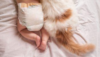 gato-e-bebe-3-1280×720