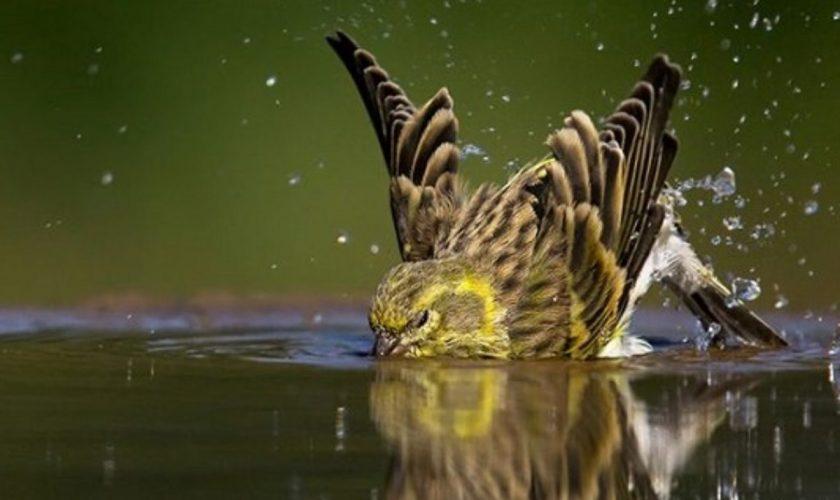 A-Importância-do-Banho-para-os-Pássaros-1200×900