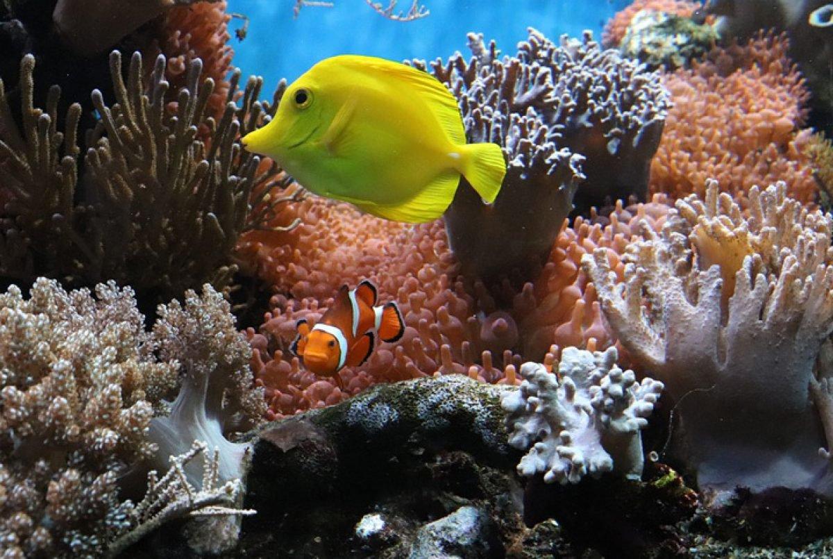 corais-1200×805