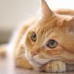 gato-laranja