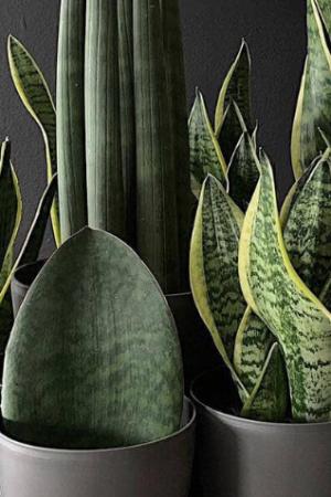 plantas-de-sombra-capa